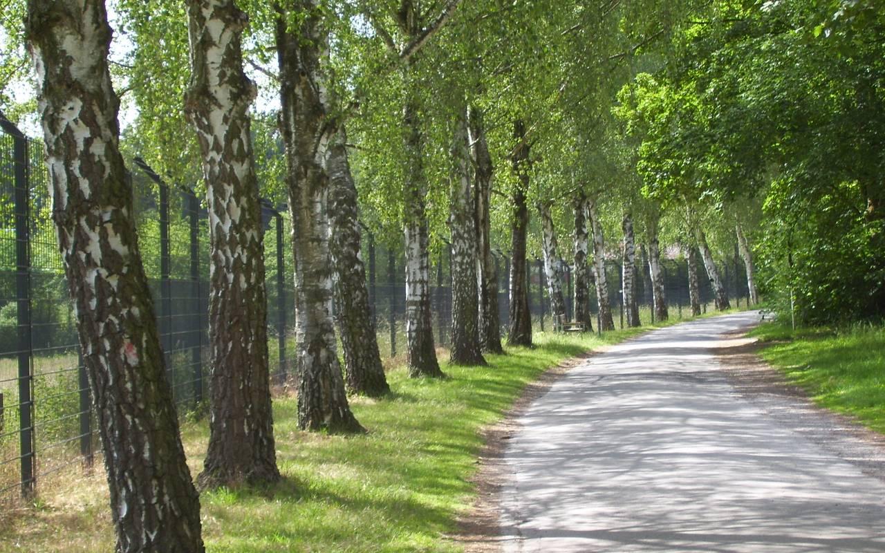 Birkenallee in der Nähe vom Dortmunder Zoo